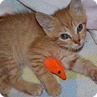 Adopt A Pet :: Obi - Island Park, NY