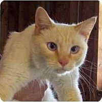 Adopt A Pet :: Keegan - Summerville, SC