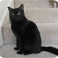 Adopt A Pet :: Nix - Sacramento, CA