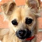 Adopt A Pet :: BUFFY (video)