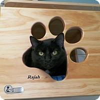 Adopt A Pet :: Rajah - Dover, OH