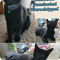 Adopt A Pet :: Benny - Madera, CA