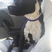Adopt A Pet :: Grover - Las Vegas, NV