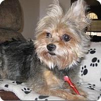 Adopt A Pet :: Stella - Pueblo, CO