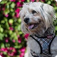 Adopt A Pet :: Charlie - Encino, CA