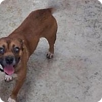 Adopt A Pet :: Jack - Tahlequah, OK