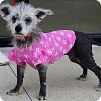 Adopt A Pet :: HANNAH - Albany, NY
