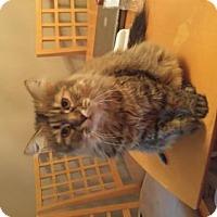 Adopt A Pet :: Gloria - Minneapolis, MN