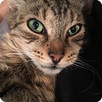 Adopt A Pet :: Miranda - Colmar, PA
