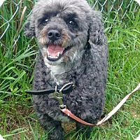 Adopt A Pet :: Corky - Courtice, ON