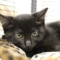 Adopt A Pet :: Scissors - Sarasota, FL