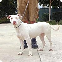 Adopt A Pet :: Lexi - Lathrop, CA