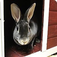 Adopt A Pet :: Bubbits - Elyria, OH