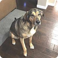Adopt A Pet :: Kalie - Pleasant Grove, CA