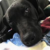 Adopt A Pet :: Alex - Elizabeth City, NC