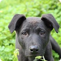 Adopt A Pet :: KEVIN - Glendale, CA