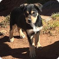 Adopt A Pet :: Wallace - Glendale, AZ