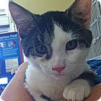 Adopt A Pet :: Henry - Riverhead, NY