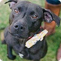Adopt A Pet :: Hillary - Reisterstown, MD