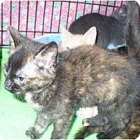 Adopt A Pet :: Keiko - Colmar, PA