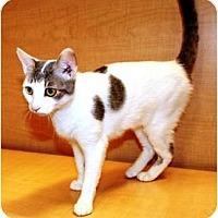 Adopt A Pet :: Charlotte - Nolensville, TN