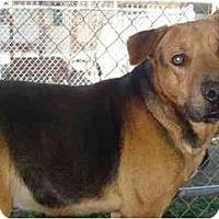 Adopt A Pet :: Raider - Fowler, CA