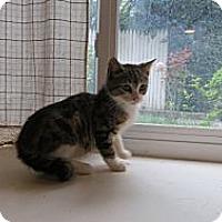 Adopt A Pet :: Kiwi - Piscataway, NJ