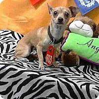 Adopt A Pet :: Jacks URGENT - San Diego, CA