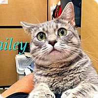 Adopt A Pet :: Bailey - Foothill Ranch, CA