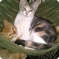 Adopt A Pet :: Chelsea & Chandler - Sterling Hgts, MI