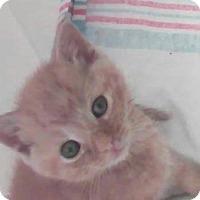 Adopt A Pet :: Angus - Union, KY