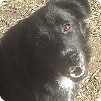 Adopt A Pet :: BELLA - Bedminster, NJ
