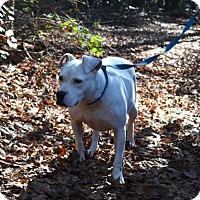 Adopt A Pet :: Diamond - Augusta, GA