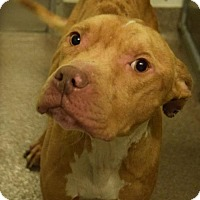 Adopt A Pet :: Duke D-68642 - Westampton, NJ