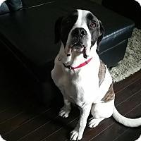 Adopt A Pet :: Kessler - Saskatoon, SK