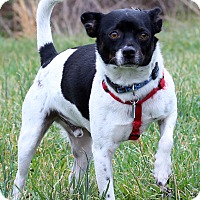 Adopt A Pet :: Willie ADOPTION PENDING - Waldorf, MD