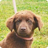 Adopt A Pet :: **PAISLEY** MEET JUNE 11TH! - Mukwonago, WI