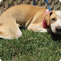 Adopt A Pet :: *ZOEY - Norco, CA