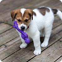 Adopt A Pet :: Dennis - Minneapolis, MN