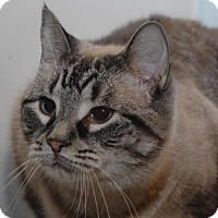 Adopt A Pet :: Snowflake - Jaffrey, NH