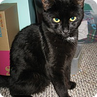 Adopt A Pet :: Raven - Queensbury, NY
