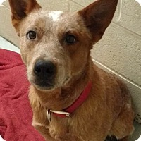 Adopt A Pet :: Ivin - Cannelton, IN