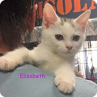 Adopt A Pet :: ELIZABETH - Cliffside Park, NJ