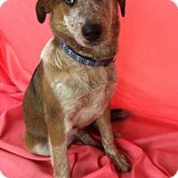 Adopt A Pet :: Wyley - Livonia, MI