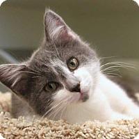 Adopt A Pet :: Ciera - East Brunswick, NJ