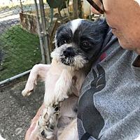 Adopt A Pet :: Spikes - Mt. Laurel, NJ