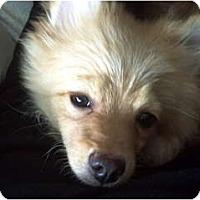 Adopt A Pet :: CARRERA - Minnetonka, MN