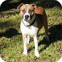 Adopt A Pet :: Ali - Austin, TX