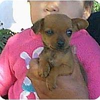 Adopt A Pet :: Minnie - dewey, AZ