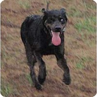 Adopt A Pet :: Jack (one eyed jack) - Allentown, PA